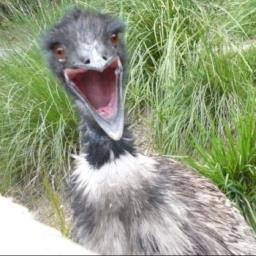 Screaming Bird
